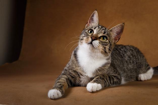 灰色と白の縞模様の猫