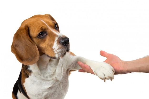 Смешная милая собака изолированная на белизне