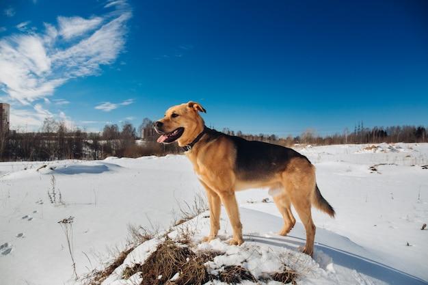Симпатичные смешанные породы собак снаружи. дворняга в снегу