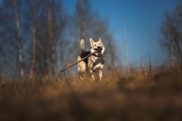 Две собаки бегут по полю в солнечный день