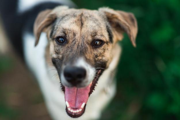 立ってカメラ目線で幸せな雑種犬を上から見る