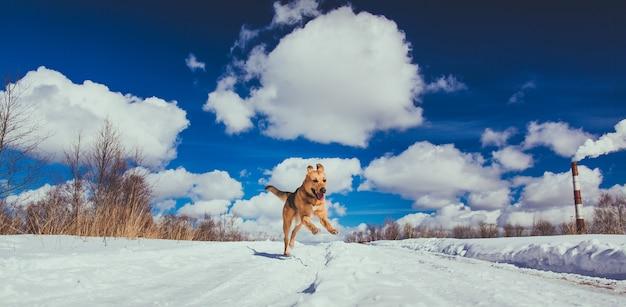 Милая собака работает на улице в зимний период