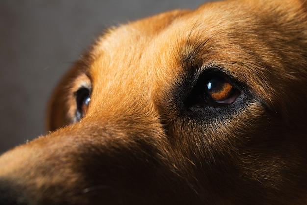 インテリアの雑種犬の肖像画を閉じる