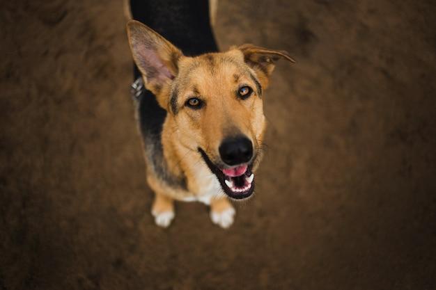 立っているとカメラ目線で幸せな雑種犬の上からの眺め