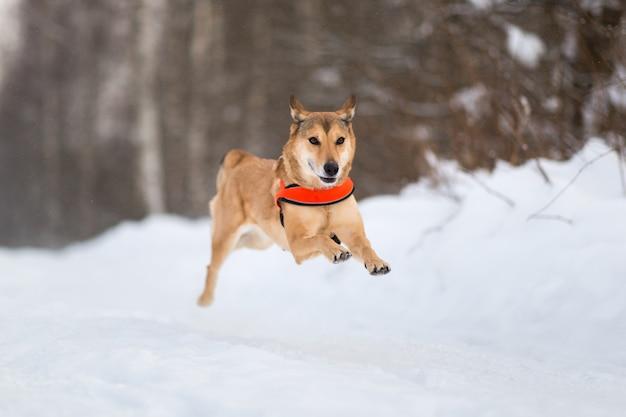 Милая смешанная собака породы гуляя в парк. дворняга в снегу