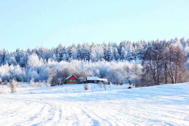 森、木と美しい冬の風景