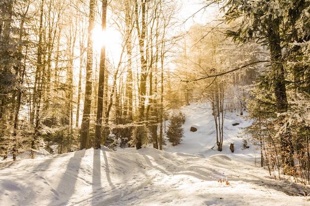 冬の小道で凍った木々を突き抜ける太陽光線。