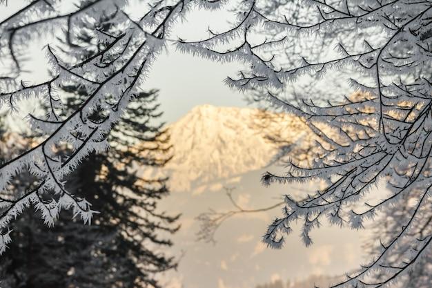枝に大きな氷針。