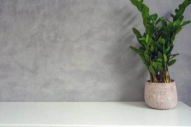 コンクリートの壁の近くの装飾的な緑の家の植物