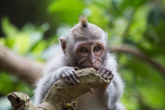 Маленькая милая и застенчивая обезьяна на дереве с зелеными листьями в джунглях, дикой природы