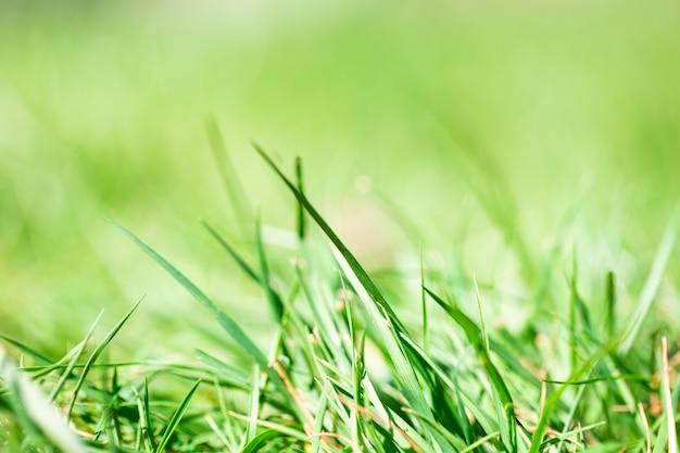 Свежая зеленая яркая весенняя трава с солнечным светом и размытой стеной, селективный фокус, летняя природа концепции стены