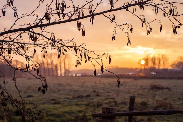 日没の風景のカラフルな背景の木からビンテージフレーム