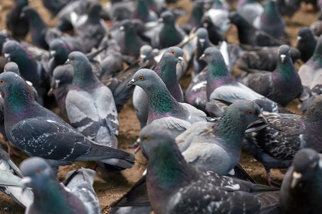 Голуби, сидящие в голубятне