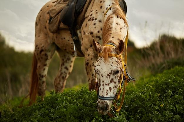緑の牧草地に放牧雄大な馬