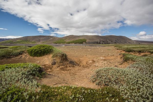 緑の低植生と砂のアイスランドの自然風景