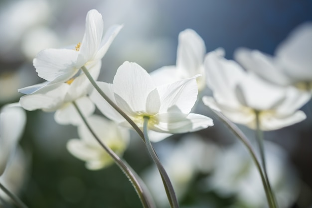 美しい春の白い花