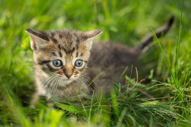 緑の芝生の小さなぶち子猫