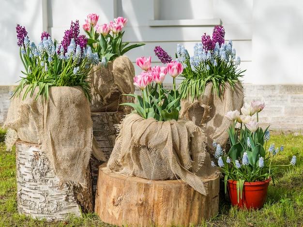 チューリップの装飾的組成物。装飾的な自然の風景に植えます。美しい色とりどりの花。