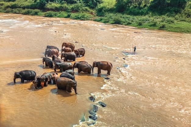 野生の象はオレンジ色の川の水で洗います。野生の動物。