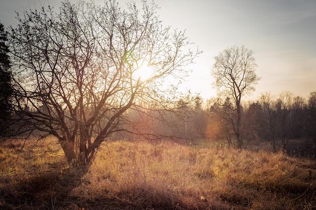 Осеннее дерево без листьев в ярком свете заката.