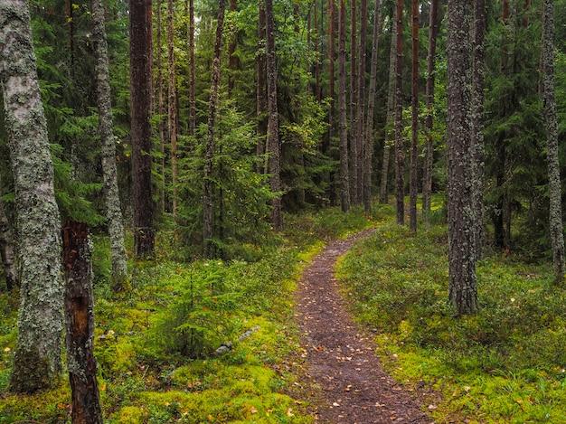 風光明媚な鮮やかな緑の森の風景。深い森の木々の下の道。緑の草と葉の間の経路とカラフルな風景。