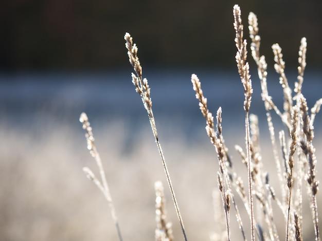 最初の霜。葉の霜。