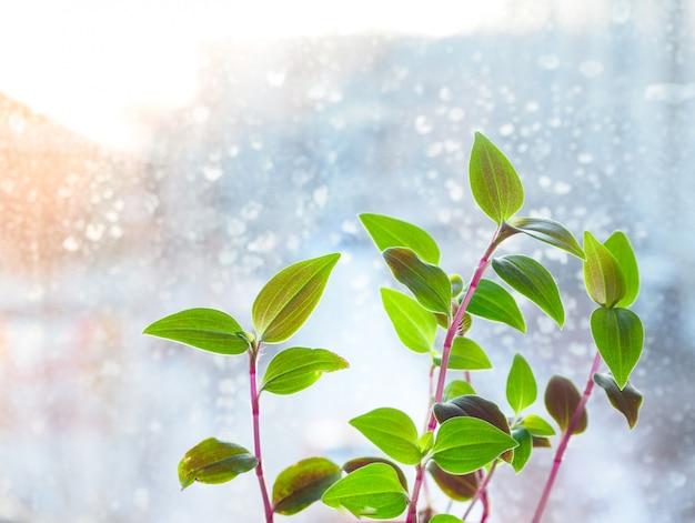 冷ややかなウィンドウに緑の植物。