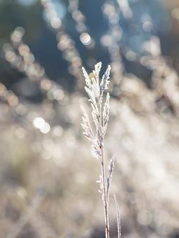 最初の霜。葉の霜。冬の冷ややかな