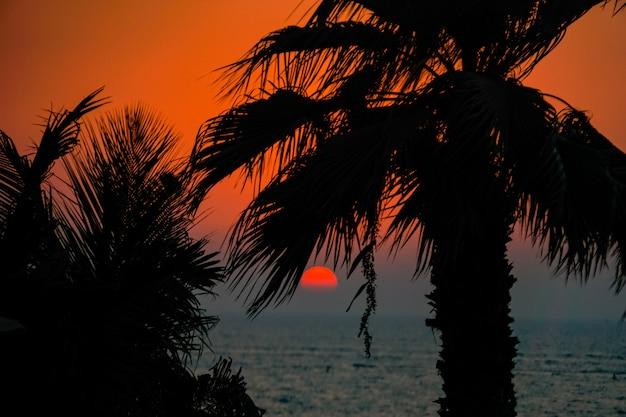 ヤシの木と赤い太陽の美しい夕日。アラビア湾の熱帯の夕日。ドバイ。