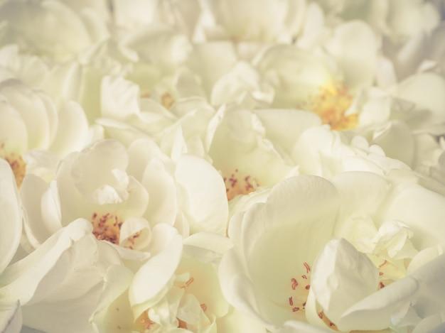 多くのバラのクローズアップ。リラクゼーションのためのアロマセラピー。