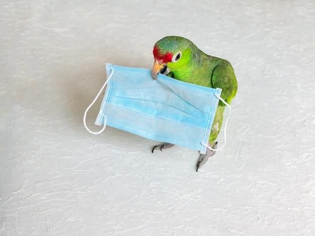 緑のオウムの健康と医療の使い捨てマスク。ヘルスケアの概念。