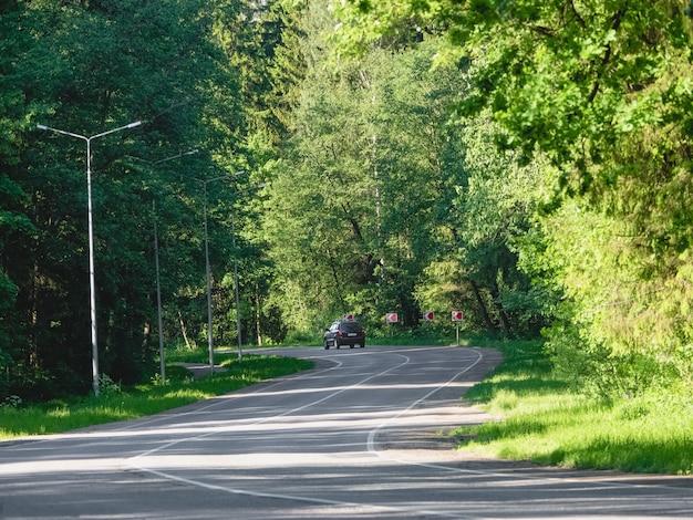 車は夏の森の曲がりくねった高速道路に乗る
