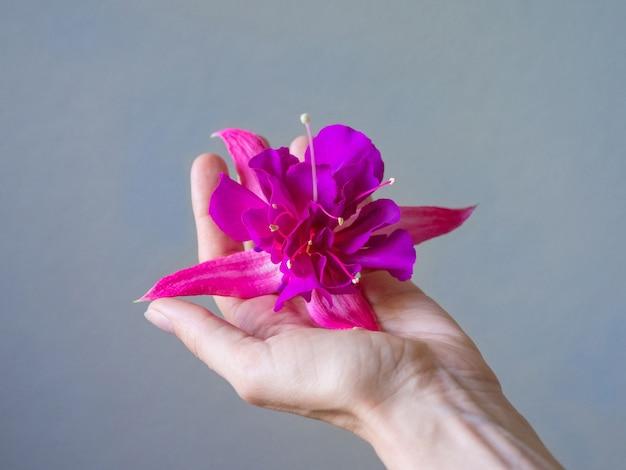 紫色の花と美しい女性の手のクローズアップ