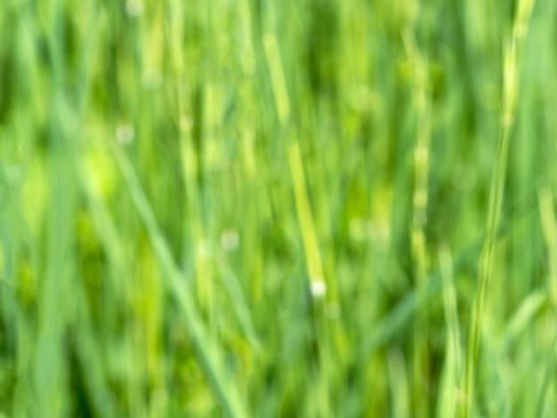 Затуманенное зеленая трава