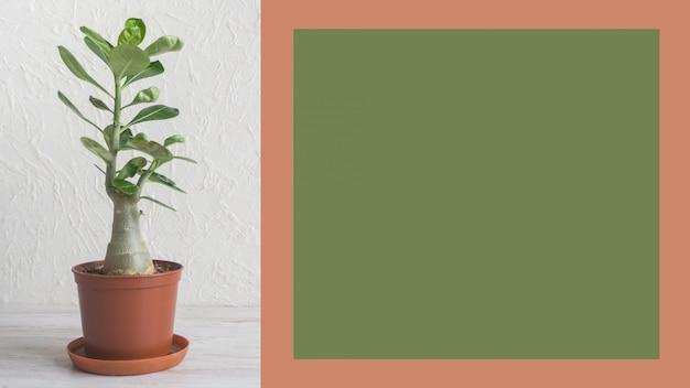 Саженцы комнатных растений и зеленая пустая доска