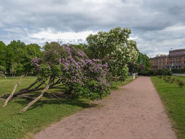Красивый летний городской пейзаж с цветущей сиренью. санкт-петербург,