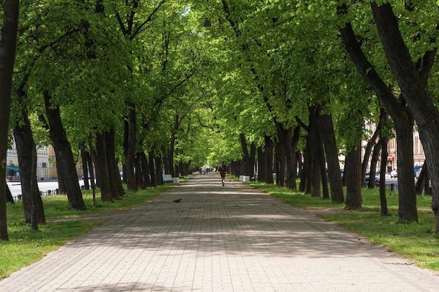 夏の市内の日陰の広い歩行者通り。サンクトペテルブルク