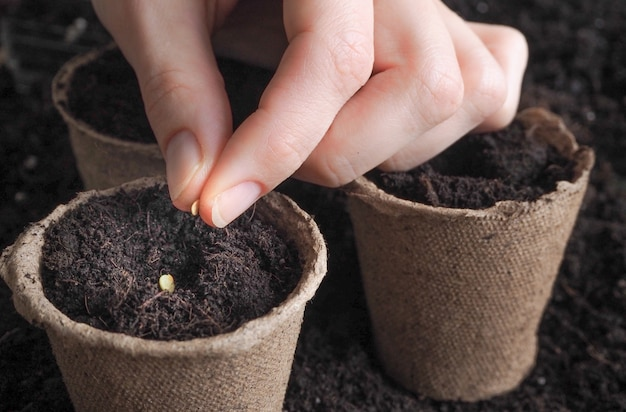 土壌に対する私の手の種。春に種を植える