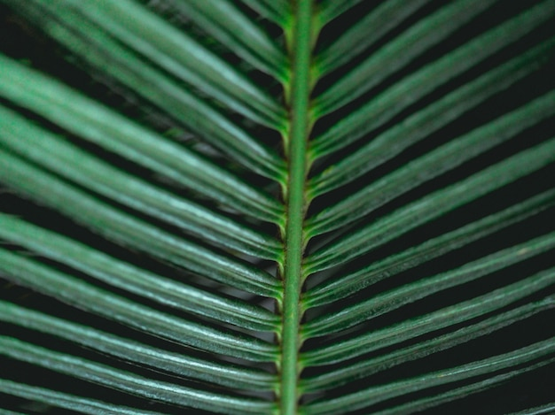 Пальмовые листья в естественной среде. богатая зелень. растения в ботаническом саду.