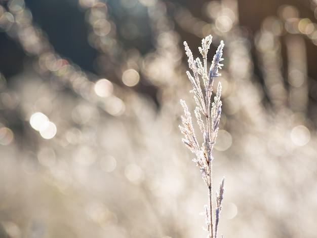 最初の霜。葉の霜。冬の冷ややかな抽象的な自然。