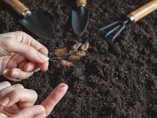 指にタバコの種。タバコの種を植えます。