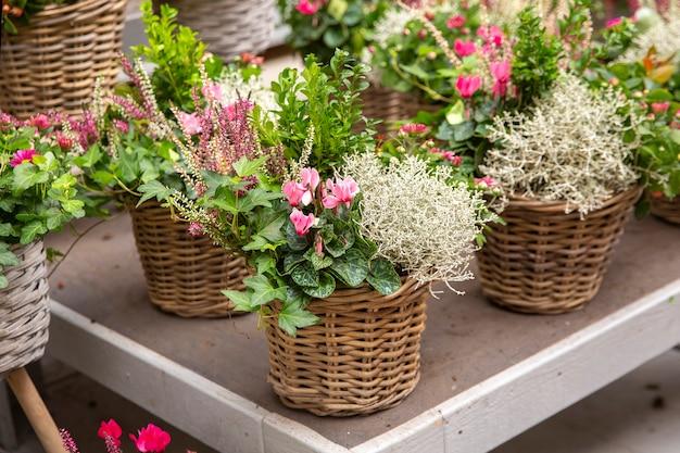 装飾的な鍋や籐のバスケットの花々。庭のための装飾。花を育てる。生花。