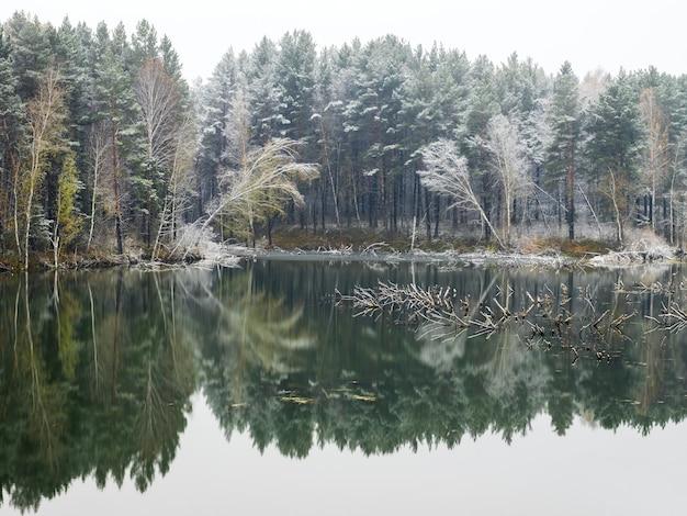 Деревья и их отражения в воде озера