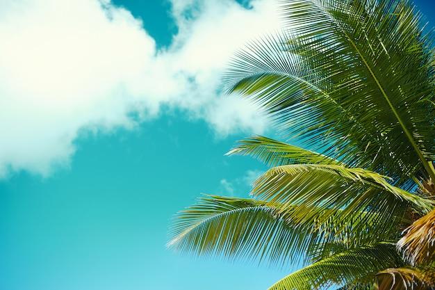 ヤシの葉の木の枝の海と空の背景と熱帯の夏のビーチ