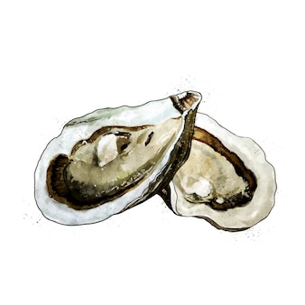カキ、二枚貝の水彩画の隔離された図。