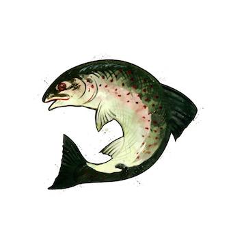 サーモン、湾曲した魚の水彩の隔離された図。