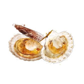ホタテ、二枚貝の水彩画の隔離された図。