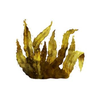 海昆布、海藻の水彩の隔離された図。