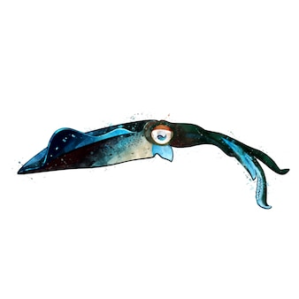 イカ、カラマリーの水彩の隔離された図。