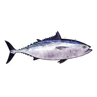 マグロ、魚の水彩の隔離された図。